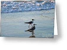 Gulls Strolling Tybee Island Beach Greeting Card