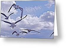 Gulls Will Be Gulls Greeting Card