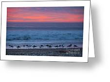 Gulls With Pink Sky Greeting Card