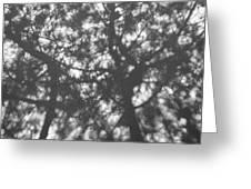 Gunmetal Grey Shadows -  Greeting Card