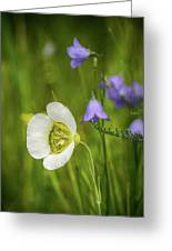 Gunnison's Mariposa Lily Greeting Card