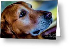 Gus As Photo Assistant 3504 Greeting Card