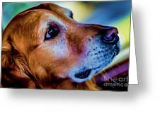 Gus As Photo Assistant 3504t2 Greeting Card