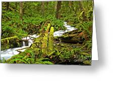 Gushing Through Ferns And Forest Greeting Card