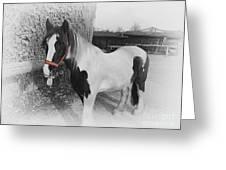 Gypsy Horse Greeting Card