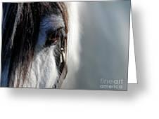 Gypsy Eye Greeting Card