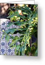 Hacienda Afternoon  Greeting Card