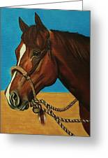 Hackamore Horse Greeting Card