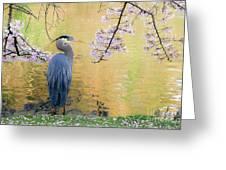Haiku, Heron And Cherry Blossoms Greeting Card