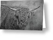 Hairy Highlander Bw Greeting Card