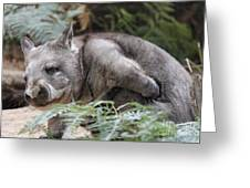 Hairy-nosed Wombat Greeting Card
