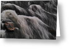 Hairy River Greeting Card