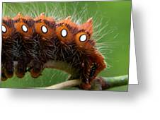 Hairy Scary Greeting Card