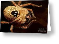 Hairy Spider Greeting Card