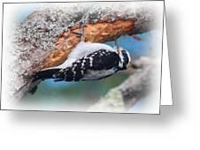 Hairy Woodpecker 2 Greeting Card
