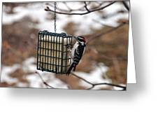 Hairy Woodpecker 2 Greeting Card