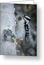 Hairy Woodpecker Female Greeting Card