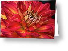 Half pint red dahlia photograph by julie palencia half pint red dahlia greeting card m4hsunfo
