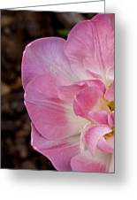 Half Tulip Greeting Card