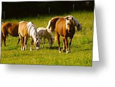 Halflinger Horses Greeting Card
