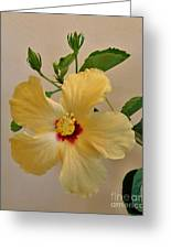 Hallaluiah Hibiscus Greeting Card