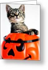 Halloween Kitten Greeting Card