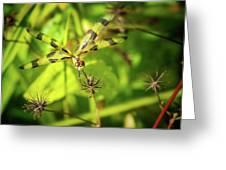 Halloween Pennant Dragonfly Greeting Card