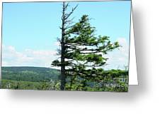 Halved Pine Greeting Card