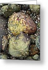 Hammonasset Rocks Greeting Card