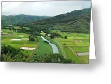 Hanalei Taro Fields Greeting Card
