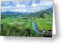 Hanalei Valley Taro Field Greeting Card