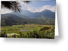 Hanalei Valley Taro Fields - Kauai Greeting Card