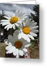 Handful Of Daisies Greeting Card
