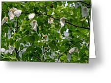 Handkerchief Tree Greeting Card