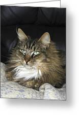 Handsome Cat Greeting Card