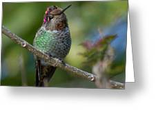 Curly Top Hummer Do Greeting Card