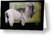 Handsome Pygmy Goat Greeting Card