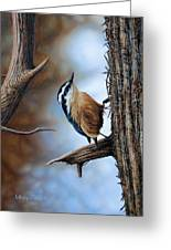 Hangin Out - Nuthatch Greeting Card