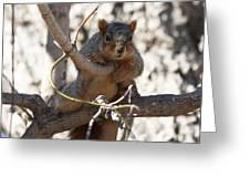 Hanging Around Greeting Card