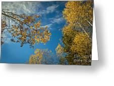 Hanging Aspen Greeting Card