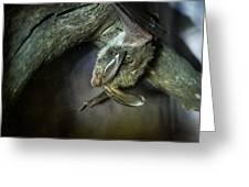 Hanging Big Eared Bat Greeting Card