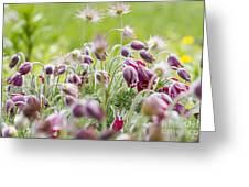 Hanging Blooms Greeting Card