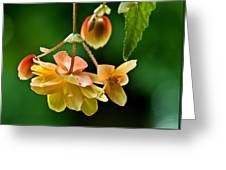 Hanging Flower Greeting Card