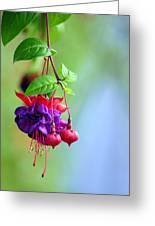 Hanging Gardens Fuschia Greeting Card by Laura Mountainspring