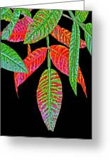 Hanging Green And Red Leafs... Greeting Card