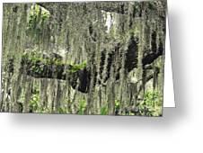 Hanging Moss Greeting Card