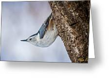 Hanging Nuthatch Greeting Card
