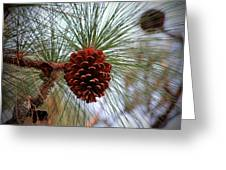 Hanging  Pine Cone Greeting Card