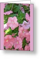 Hanging Pink Petunias Basket Greeting Card