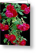 Hanging Roses 2593 Greeting Card